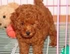 上海托运宠物价格宠物狗空运价格