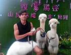 东莞暑假动物表演租赁矮马羊驼出租萌宠展示