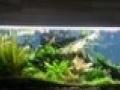玻璃大鱼缸一个