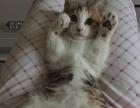 小猫找靠谱主人
