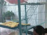 转让猫笼子因为地方小所以打算卖