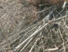 开发地片杂树杂枝清理地表