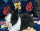 专业养殖宠物兔