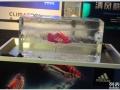 上海冰雕节日庆典 冰雕装饰 展示冰雕,上海启欣展览展示有限