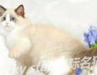 纯种活体猫咪出售 全国可包邮