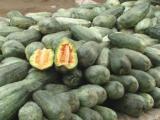 羊角脆瓜 河北 新鲜水果 零售 批发 合作 青县羊角蜜 羊角脆瓜