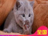 里有蓝猫蓝猫钱包健康签协议
