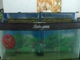 一次成型鱼缸600元