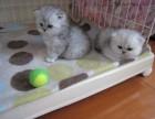 广州哪里卖宠物猫 纯种猫什么比较好养什么猫漂亮
