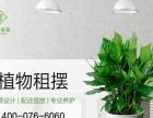 专业绿色花卉绿植物租赁批发专业设计定期养护价格低