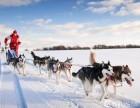 57美国网 雪地欢乐 挑战狗拉雪橇体验之旅!