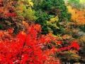 十一北京长城,故宫,鸟巢,颐和园一日游特价正火热报名中!散客团队