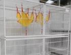 猫、狗笼子出售自家用单层(獒运)笼