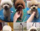 小型犬,免费美容
