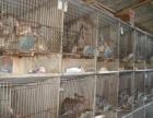 小兔卖小兔新西兰兔比利时兔 出售