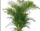 专业承接公司绿植租摆、绿植养护、绿植销售等服务