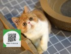 南阳哪里有宠物猫出售,南阳哪里有卖纯种加菲猫价格