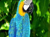 台州本地出售观赏鸟健康保障