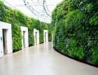 西安绿植墙 室外围墙绿化 仿真绿植墙 露台花园