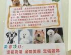 圣宠宠物新店开业大优惠
