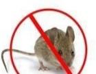 灭老鼠、灭蟑螂、灭蚂蚁、灭跳蚤公司