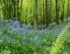 衡水森林甲醛治理专业正规,质量保证,您放心的选择