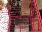 低价出售狗狗笼子和狗狗栅栏