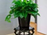 招財貓綠植租售公司 專業從事各種場合的綠植租擺和銷售