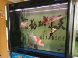 好品质40公分的四条锦鲤和成品底滤鱼缸转让