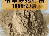 枯草芽孢杆菌的作用 枯草芽孢杆菌价格 枯草芽孢杆菌厂家