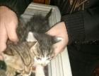 出售几个月大的小猫咪