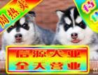 买纯种健康哈士奇犬 赠送用品 - 签质保协议