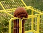 便宜出售狗笼子九成新
