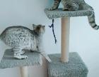 猫爬架搬家不方便拿便宜转手