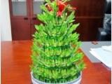 植物出租 植物銷售 植物租賃 植物出擺滿一年送一個月