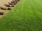 5元大量出售優質草坪,四季常青草坪