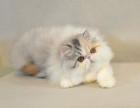 杭州 波斯猫多少钱哪里有卖