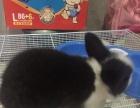宠物兔盖脸猫猫兔