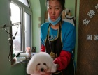 沈阳学习宠物美容师最好的宠物美容培训