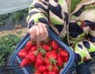 三八妇女节推荐 上海农家乐旅游 采草莓钓大鱼 吃土菜游海边