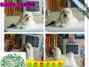 约克夏幼犬真正的贵族