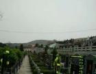 渭南龙寿山生态陵园