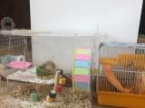 萌哒哒的小仓鼠求找温暖的家