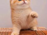 品相好 公道 颜色齐全 公母均有猫咪幼崽