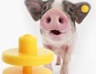 低频牛猪羊耳标RFID电子标签优质带字耳标动物耳标