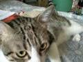 小猫咪结缘因工作原因无法照顾