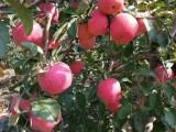 黑土鹿糞雞糞有機肥各種果樹綠植鮮花全長春免費送貨上門