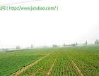 山东省济宁市泗水县杨柳镇118亩旱地出租