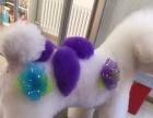 齐齐哈尔大印象宠物美容培训学校