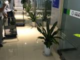 办公室内外绿植租摆定期养护免费配送
